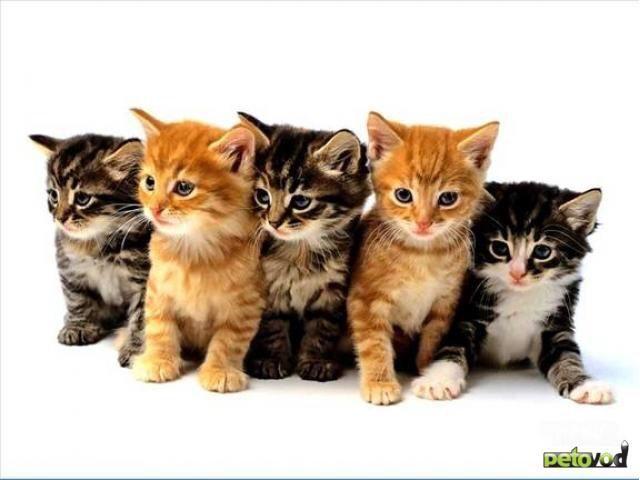 Котята в добрые руки !