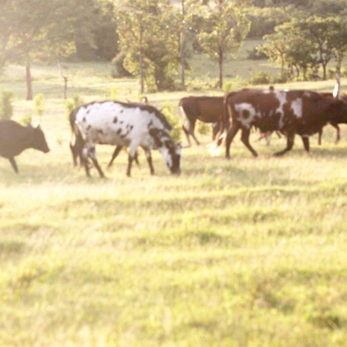 Vendemos Fazenda de 170 Hectares de Terreno Huíla, Lubango Chibia