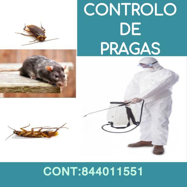 Fumigação   Pulverização & Controlo de Pragas em Casas e Empresas.