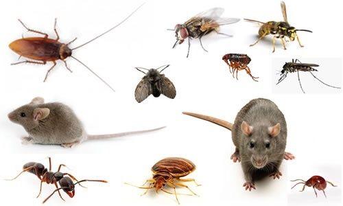 От 3500тг 100% уничтожение всех насекомых и грызунов!!!