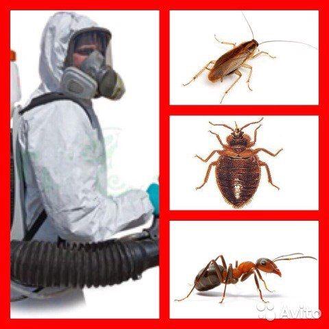 Тараканы Клопы Блохи Муравьи Мышы Крысы Дезинсекция 100%