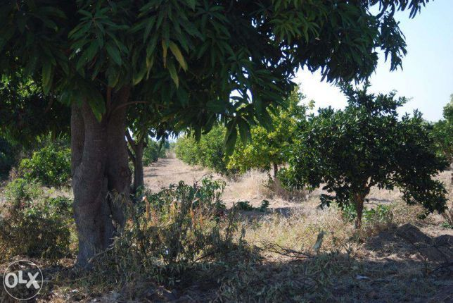 Mil hectares de terra disponíveis no QUANZA NORTE, a bom valor, ligue.