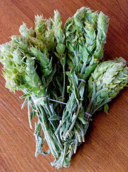 Продавам истински планински мурсалски чай антиоксидант БИО продукт