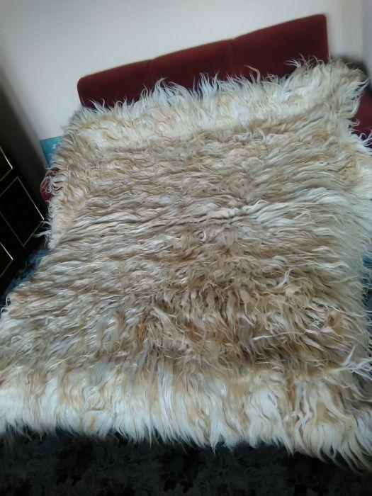 Халище от каракачанска овца