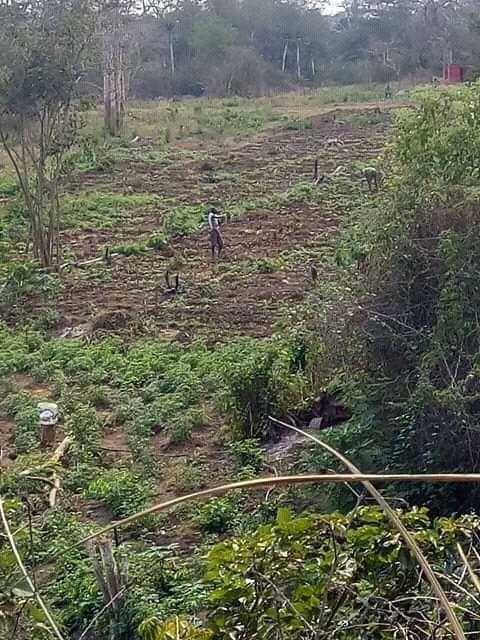 Vende Terreno 10 Hectares – Bengo
