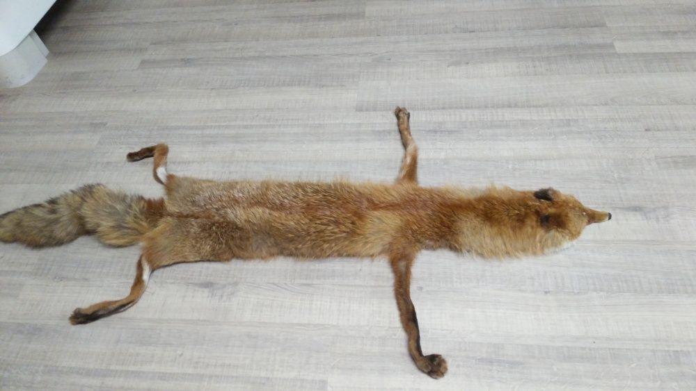 Естествена голяма лисица