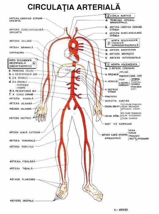 Materiale admitere medicina - Biologie