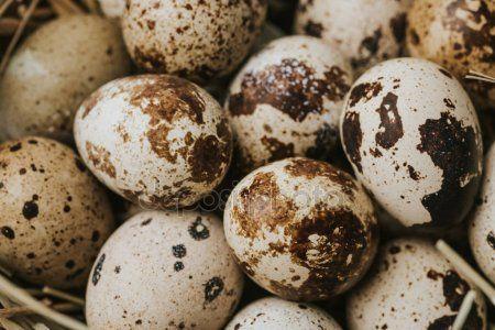 Ovos de codorna -QUAIL EGGS-