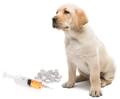 Todos os cuidados veterinários à sua porta