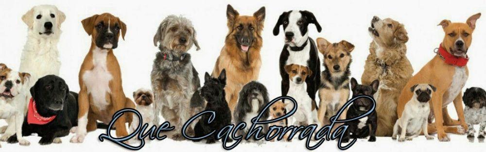 Treino canino( Adestrador)
