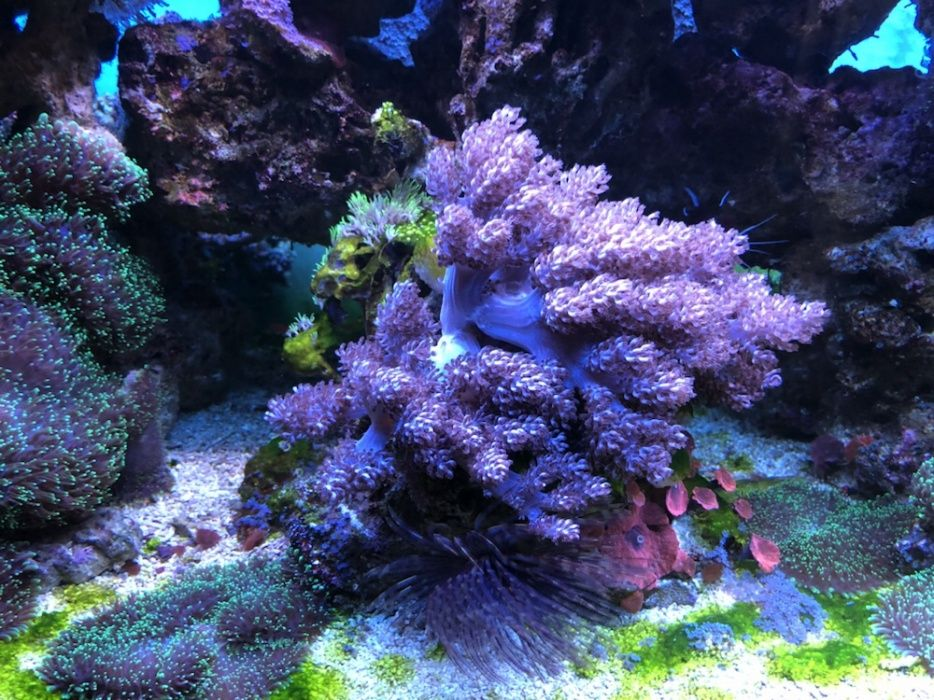 Vand corali