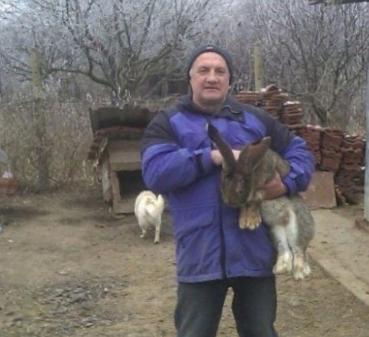Продавам зайци порода БЕЛГИЙСКИ ВЕЛИКАН чистокръвни