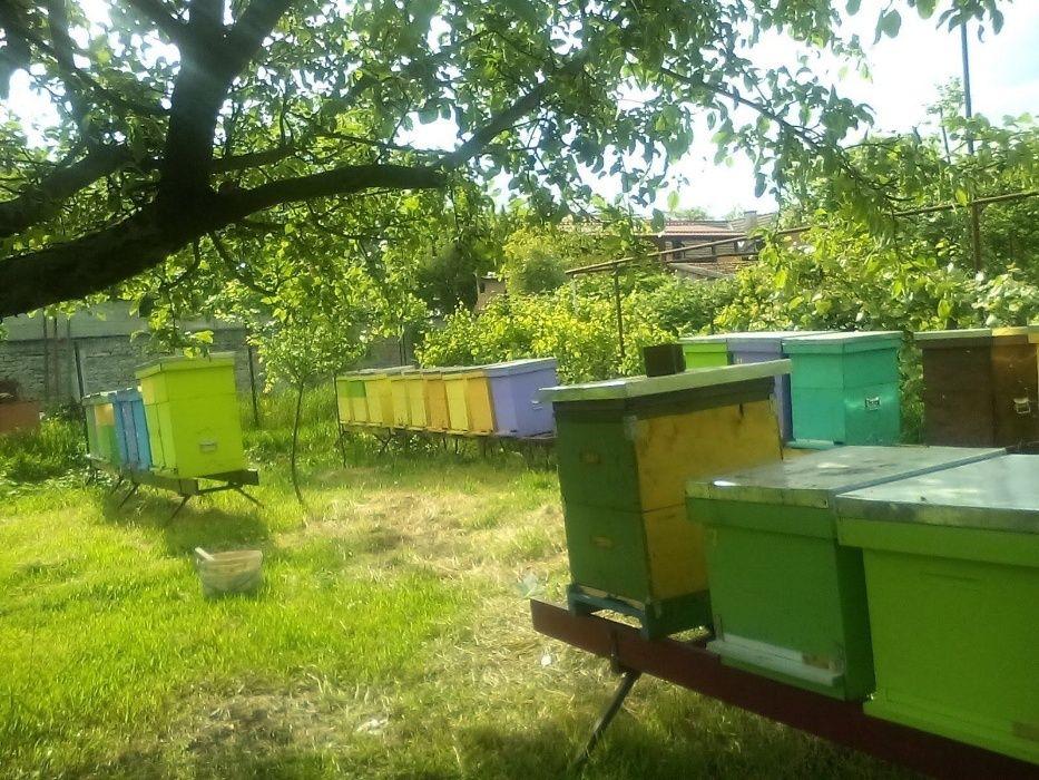 Vand stupi cu albine (+magazie), familii, rame si miere