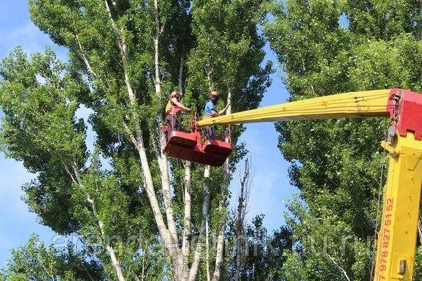 Спил, обрезка деревьев, любой категории сложности