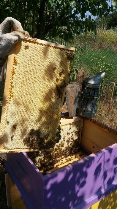 Miere de albine facelia cu poliflora(salcam), floarea soarelui, etc.