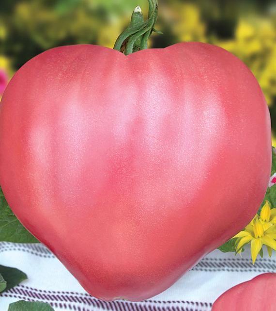 30 seminte tomate roz -Gustul de altadata, traditional si autentic!