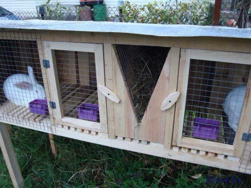 клетки для кроликов и домашних животных