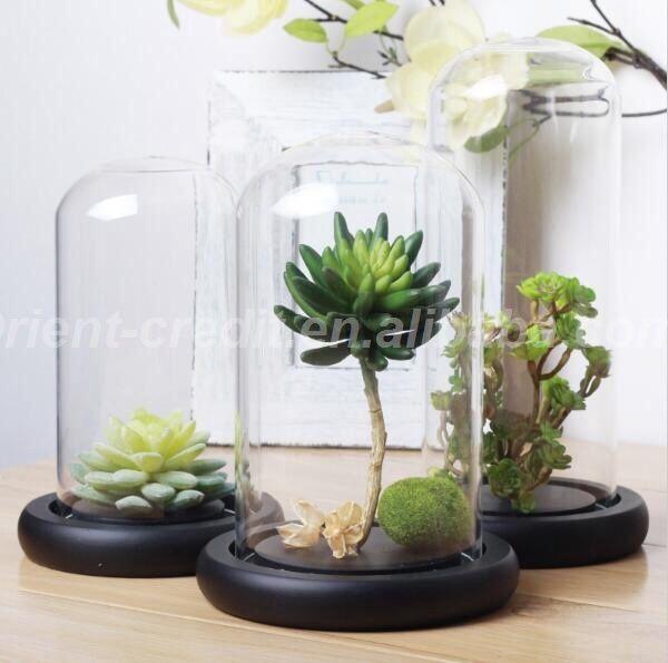 Cupole sticla cu blat negru pt Trandafiri criogenati