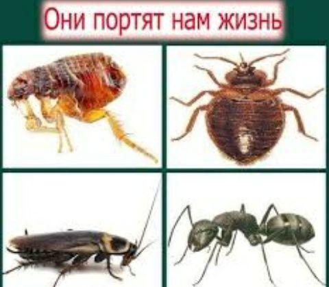 Уничтожение любых насекомых Генератором Холодного Тумана! Гарантия !