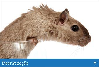 Controlo de Pragas - Eliminação de Ratos (orçamento gratuito)