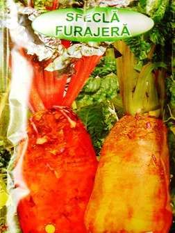 Seminte de sfecla furajera 50 grame, 250 grame