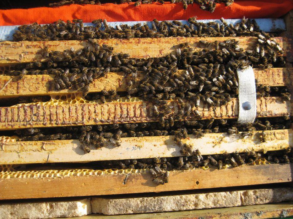 Vand familii de albine, primavara 2019