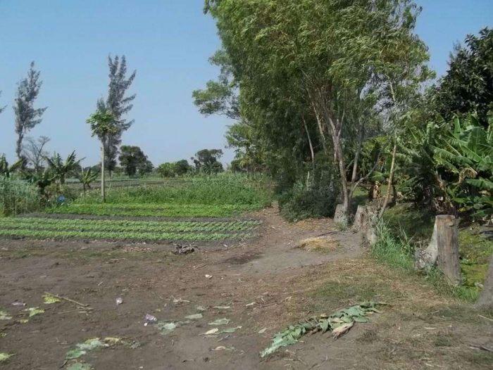 VENDE-SE: Propriedade de 7,8Ha no B. Romão na berma da estrada, Maputo