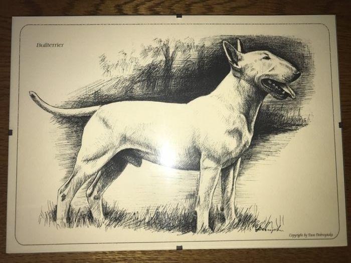 Desen bull terrier