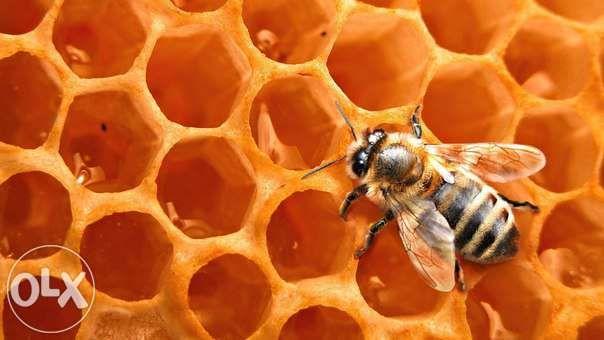 Пчелиный Воск 100% весовой
