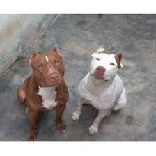 Animais doméstico a venda