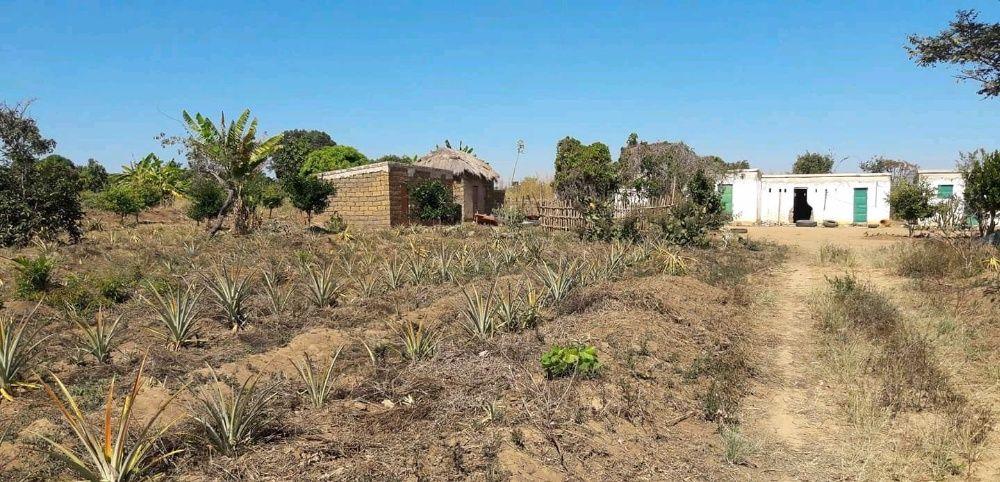 Vendo esta Fazenda,de 14 hectares localizado no Cuanza Sul