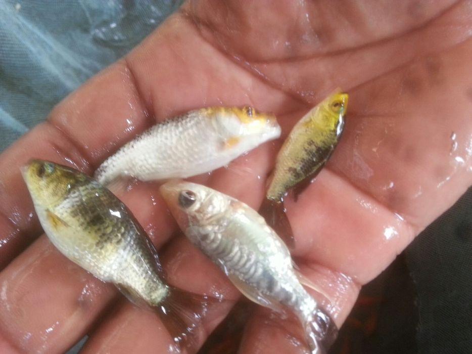 Venda de peixes ornamentais