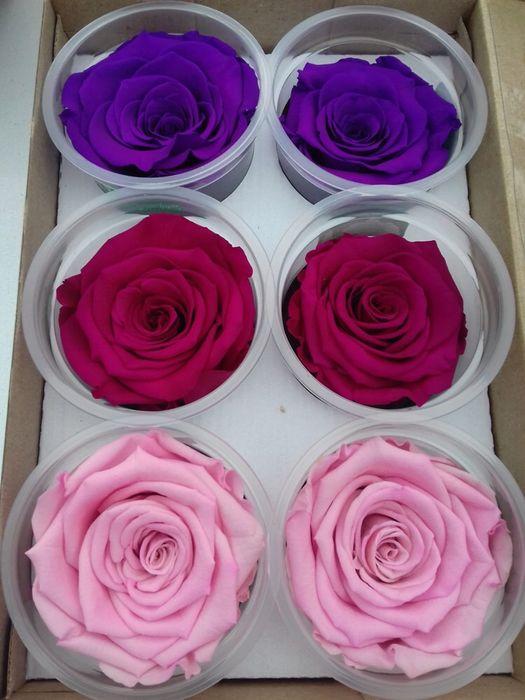 Cadou zile onomastice trandafir criogenat conservat Bucuresti - imagine 8