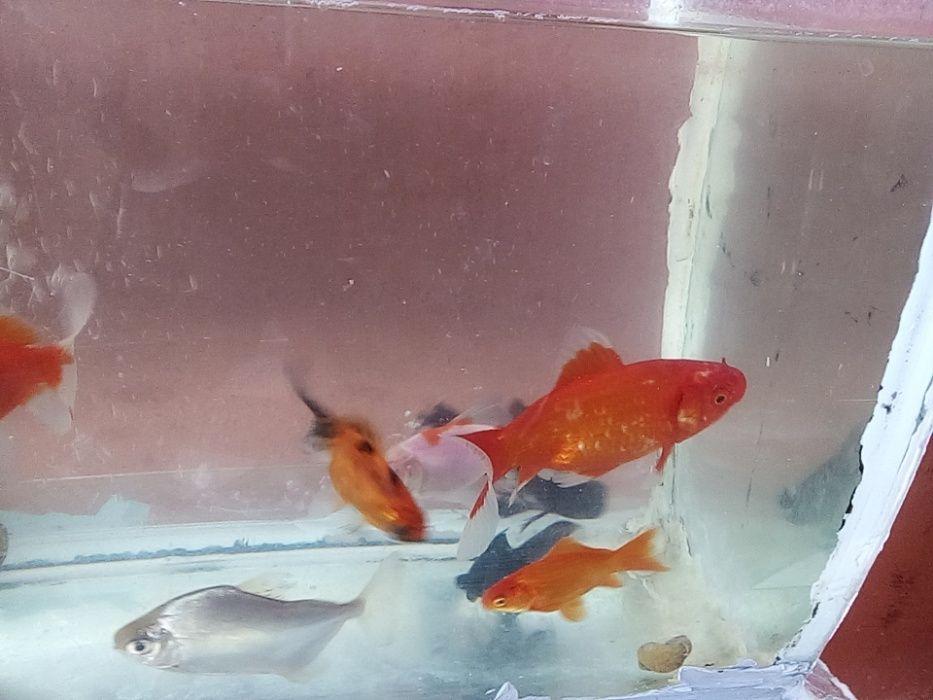 Peixes ornamentais a venda