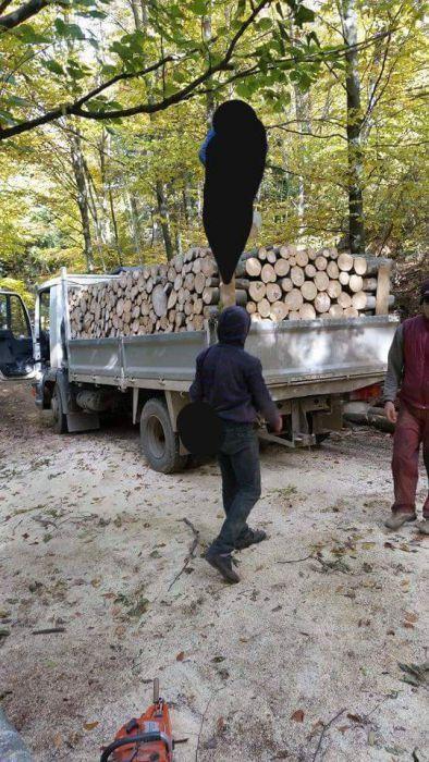 Vând lemn foc fag 300 lei/tonă