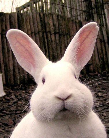 Корм для кроликов комбикорм гранулированный