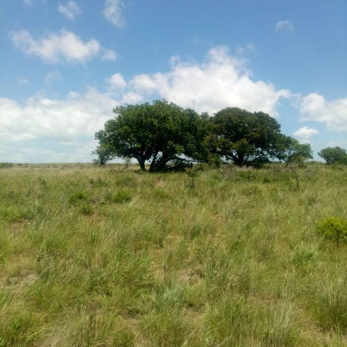 Transpassa-sê um terreno 30X40 na Praia de Bilene, zona de Mahungo. 45
