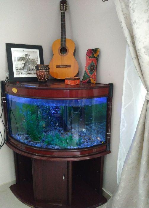 Aquário - Peixinhos - de grande dimensão 260 litros