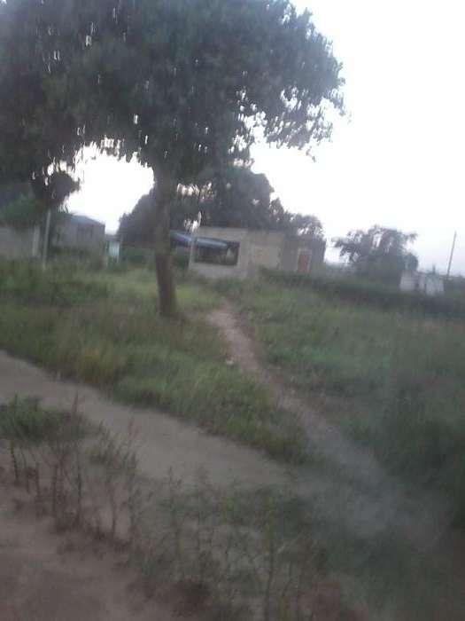 Terrenos ntaka na circular 500m da estrada com casa de caniço