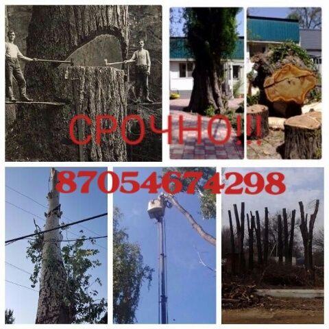 Спил деревьев профессионально в Алматы и Алатинской области!