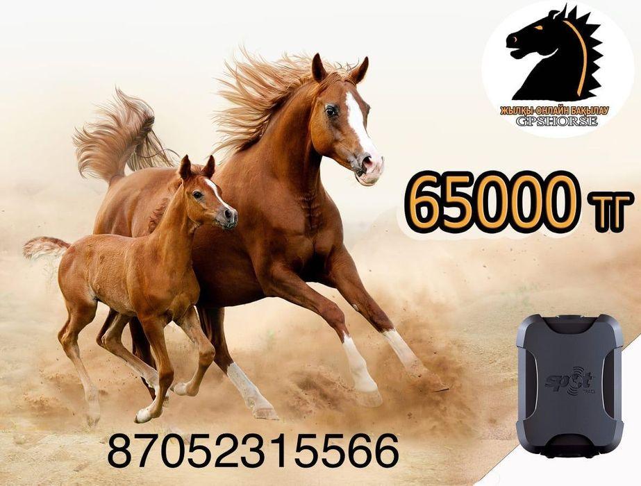 GPS спутниковый для лошадей