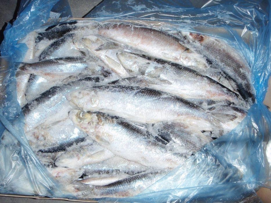 Рыба Сельдь Норвегия