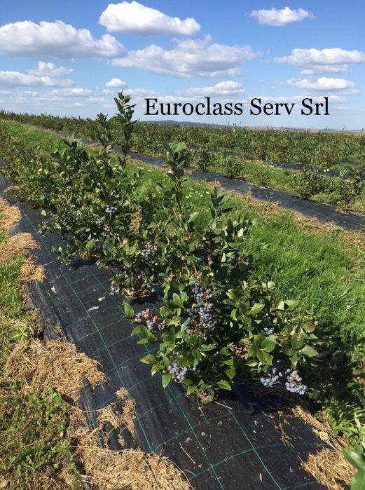 Agrotextil Mulcire 2x100ml REZISTENTA MINIM 5 Ani,Tratata UV,100gr/mp, Bucuresti - imagine 3