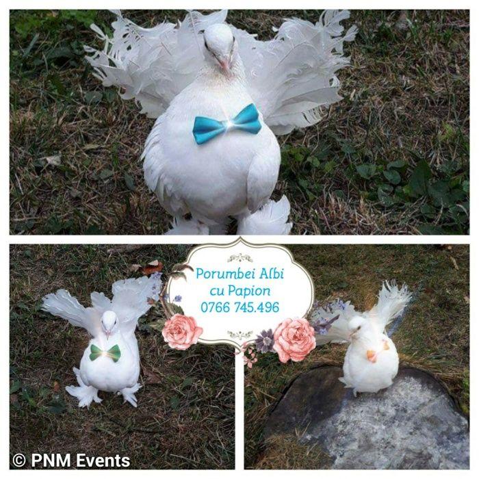 Surpriză cadou nuntă porumbei cu papion
