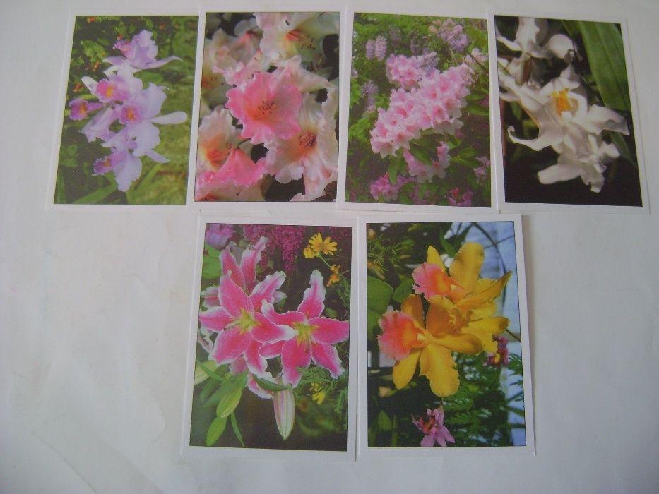 Cărţi poştale cu flori