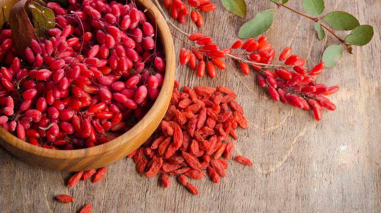 Producator Goji, rasaduri, butasi, plante, seminte, fructe