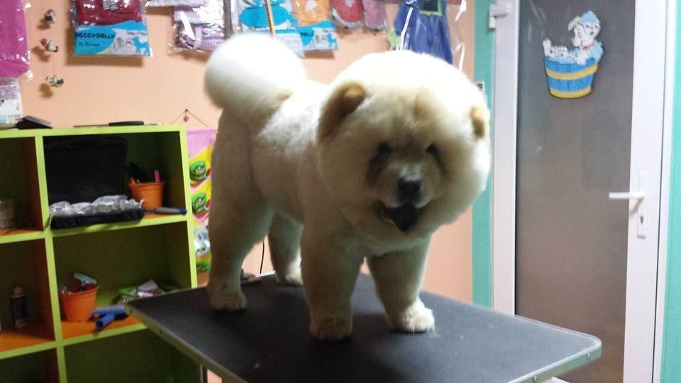 Salon canin Timisoara Timisoara - imagine 3