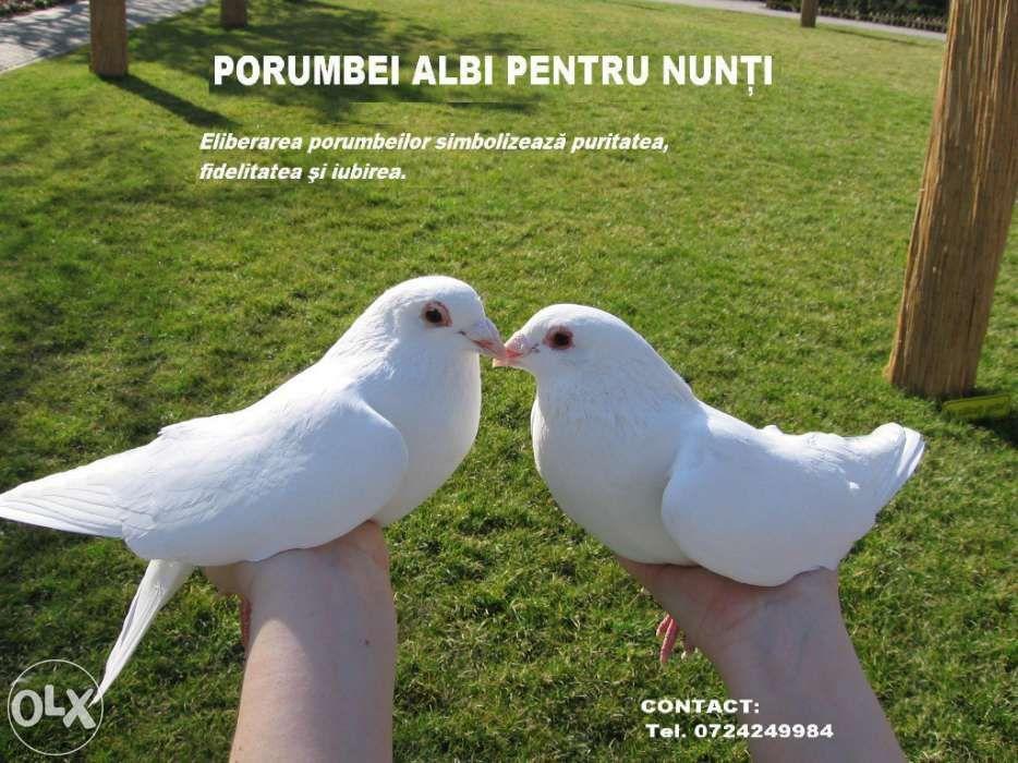 Porumbei albi pentru nunta - porumbei nunta