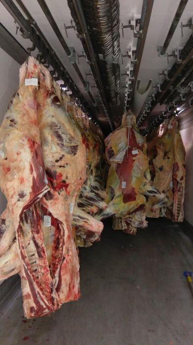 Carcasa vita bovina adultă vaca ,Miel,oaie de calitatea Botosani - imagine 4