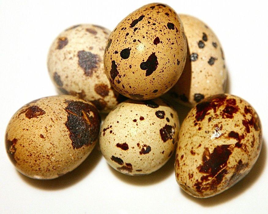 яйца домашние перепелинные